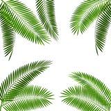 棕榈叶传染媒介例证 库存例证