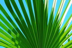 棕榈叶关闭在天空蔚蓝 免版税库存照片
