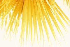 棕榈叶分支太阳轻的自然本底 免版税库存图片