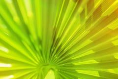 棕榈叶分支太阳轻的自然本底 免版税库存照片