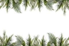 棕榈叶和树框架在白色背景 免版税库存照片