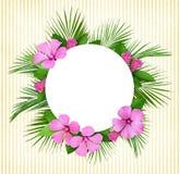 棕榈叶和桃红色花框架和圆的卡片 库存照片