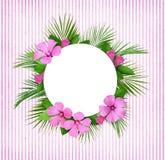 棕榈叶和桃红色花框架和圆的卡片 库存图片