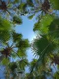 棕榈叶和蓝天在日出 Bokeh作用,夏天装饰 免版税库存图片