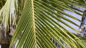 棕榈叶在一个热的夏日 免版税库存图片