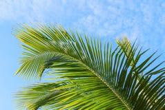 棕榈叶在反对蓝色热带天空的早晨阳光下与蓬松白色云彩 免版税库存图片