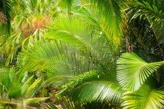 棕榈叶在庭院里 免版税库存图片