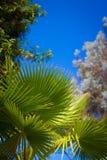 棕榈叶在明亮的蓝天下 免版税库存图片