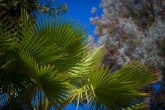 棕榈叶在清楚的蓝天下 库存照片