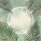 棕榈叶手拉的浅绿色的框架  向量例证
