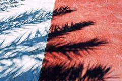 棕榈叶树荫在红色和灰色道路的 抽象backgrou 库存照片