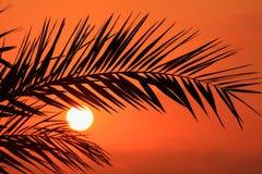 棕榈叶状体剪影在日落的 塞浦路斯 免版税库存照片