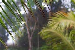 从棕榈叶状体的雨水滴 免版税库存照片