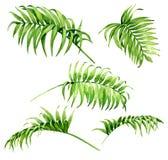 棕榈叶状体水彩剪影 向量例证