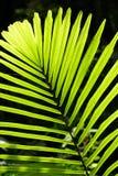 棕榈叶由后照与阳光 库存图片