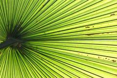 棕榈叶由后照与阳光 图库摄影