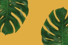 棕榈叶的图表构成在橙色背景的 免版税库存图片