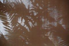 棕榈叶的抽象背景阴影树荫 免版税库存图片