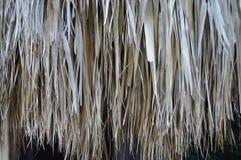 棕榈叶秋天 库存照片
