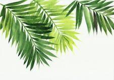 棕榈叶背景 免版税库存图片