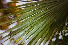 棕榈叶,在背景的bokeh的抽象背景图象 库存图片