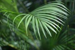 棕榈叶 有热带植物的森林 自然绿色背景 免版税库存图片