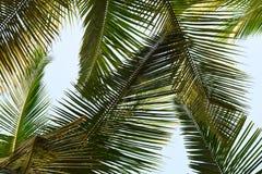 棕榈叶-绿色抽象背景 免版税库存照片