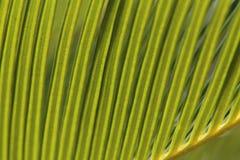 棕榈叶 图库摄影