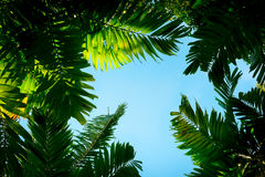 棕榈叶 免版税图库摄影