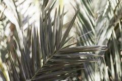 棕榈叶 库存照片
