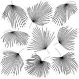 棕榈叶trachycarpus黑白等高  免版税库存图片