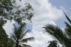 棕榈和云彩 图库摄影