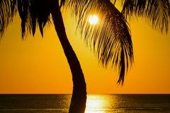棕榈和加勒比日落 免版税图库摄影