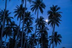 棕榈和月亮在日出前 库存图片
