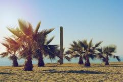 棕榈和阵雨在海滩 库存照片