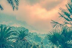 棕榈和moutains在早晨雾 图库摄影