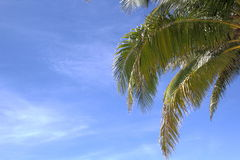 棕榈在一个晴天 免版税图库摄影