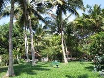 棕榈在公园 免版税库存照片