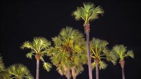 棕榈在城市的街道照明的晚上 热带亚洲,夜生活 影视素材
