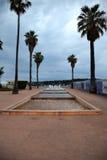 棕榈在安地比斯 免版税库存照片