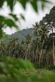 棕榈在密林 免版税库存图片