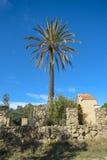 棕榈在撒丁岛 免版税库存图片
