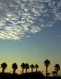 棕榈在日落现出轮廓 免版税库存图片