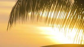 棕榈在美好的橙色日出的事假剪影在海岛上 股票录像