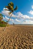棕榈在迈阿密海滩,迈阿密,佛罗里达,美国的黎明 免版税库存图片