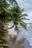 棕榈在阳光下 库存照片