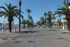 棕榈在巴塞罗那,西班牙沿海岸区  免版税库存照片
