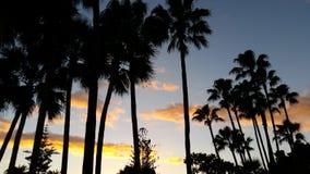 棕榈天空 免版税库存图片