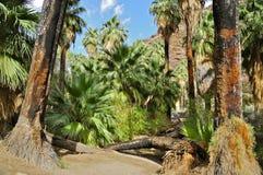 棕榈峡谷,棕榈泉 免版税库存照片