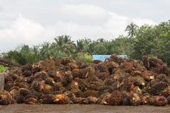 棕榈庭院 免版税库存图片